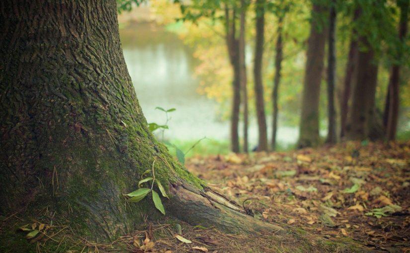 Piękny i {porządny ogród to nie lada wyzwanie, zwłaszcza jak jego konserwacją zajmujemy się sami.